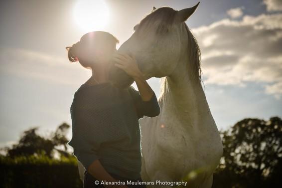 La sagesse equine
